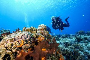 Cozumel diving from Cancun